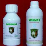 gambar vitamax dan imunomax