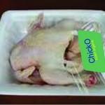 Ayam Organik alternatif ternak ayam broiler mandiri