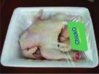 ayam broiler organik